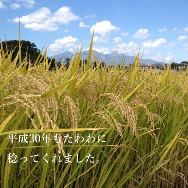 無農薬無肥料の自然栽培 めぐみの米 3kg i-crtshop 03