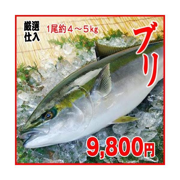 業務用  特売 ハマチ ブリ 1尾約4〜5kg