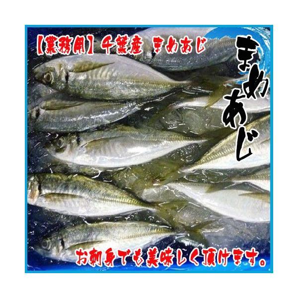 千葉産 豆アジ 4kg前後(1尾 約10-40g前後) じんた ジンタ 鯵 あじ マメアジ まめあじ|i-ichiba