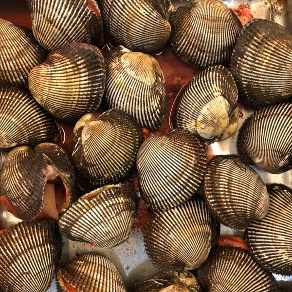 中サイズ2−3人前 活赤貝 殻付き 500g (約2-5個) アカガイ
