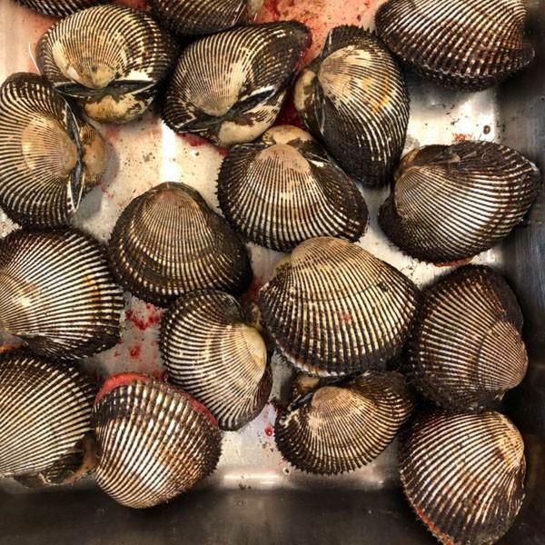 活赤貝 殻付き 500g (約2-5個) アカガイ 同梱におすすめ