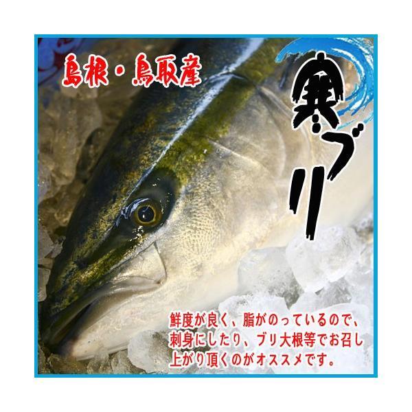 島根・鳥取産 寒ブリ 6kg〜7kg このサイズ!!! ぶり