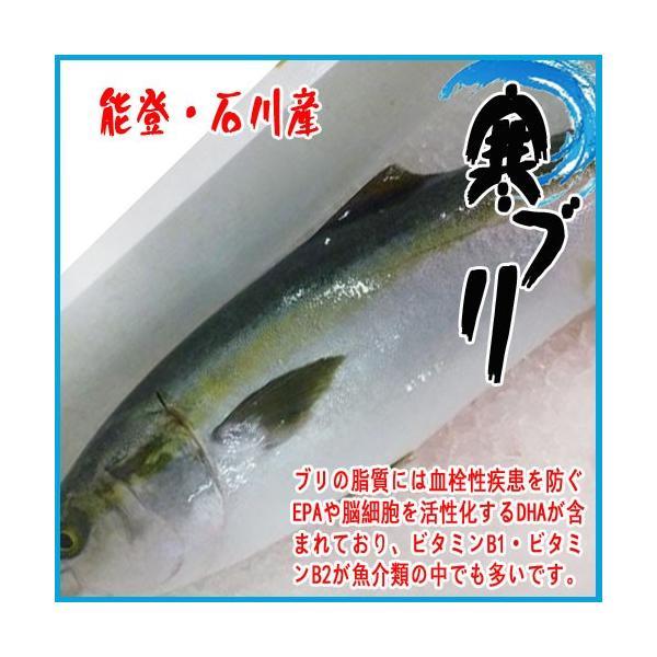能登・石川産 寒ブリ 1尾 約7〜8kg 一本物
