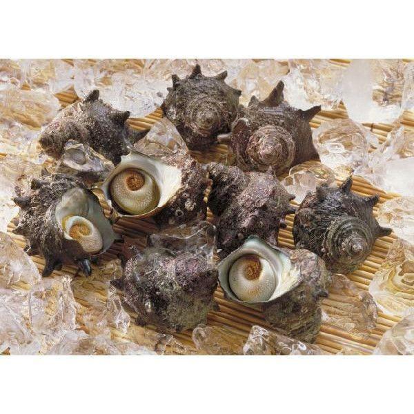 国産 活サザエ 約1kg(1個約100〜130gサイズ) サザエ さざえ 栄螺|i-ichiba|02