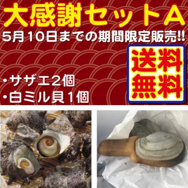 期間限定 大感謝セットA 国産サザエ100g前後2個+国産白みる貝1個 送料無料 i-ichiba