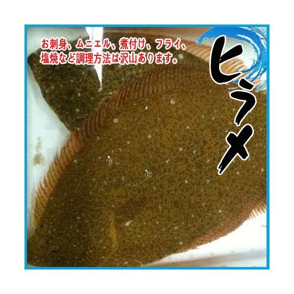 ヒラメ 活〆 約0.9-1.2kg 平目 ひらめ|i-ichiba
