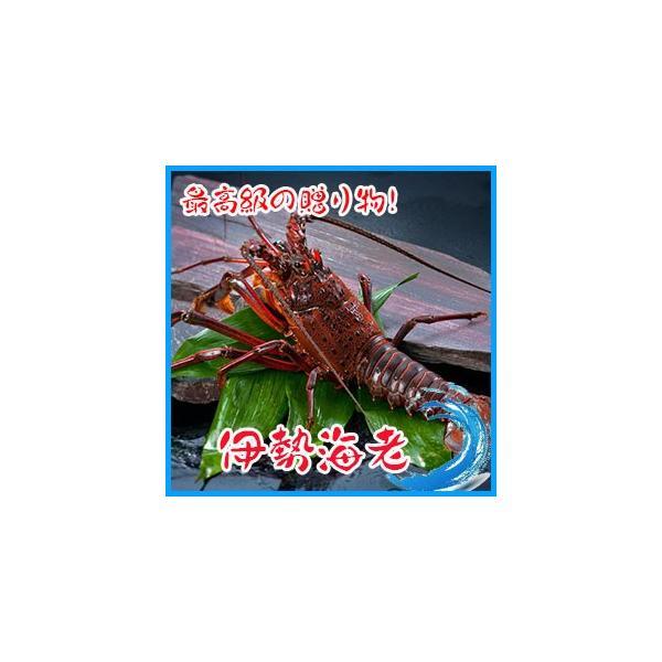 お歳暮)業務用   伊勢活海老    約300g×2尾セット ★