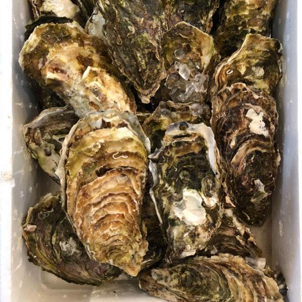 カキ 殻付かき 20粒 牡蠣 i-ichiba