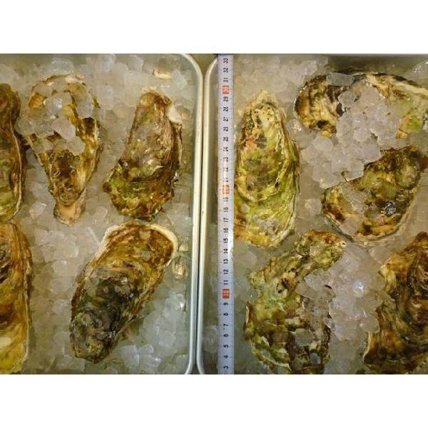 カキ 殻付かき 20粒 牡蠣 i-ichiba 02