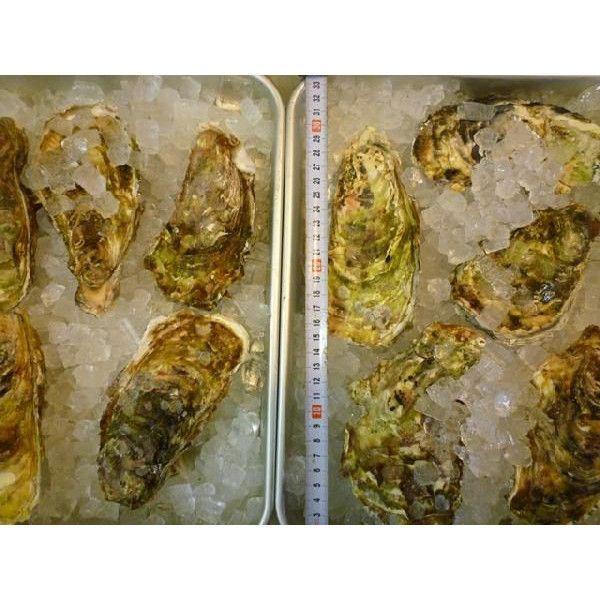 カキ 殻付かき 20粒 牡蠣 i-ichiba 04