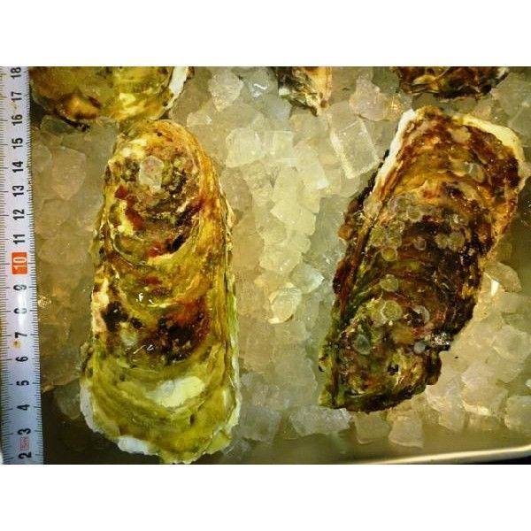 カキ 殻付かき 20粒 牡蠣 i-ichiba 05