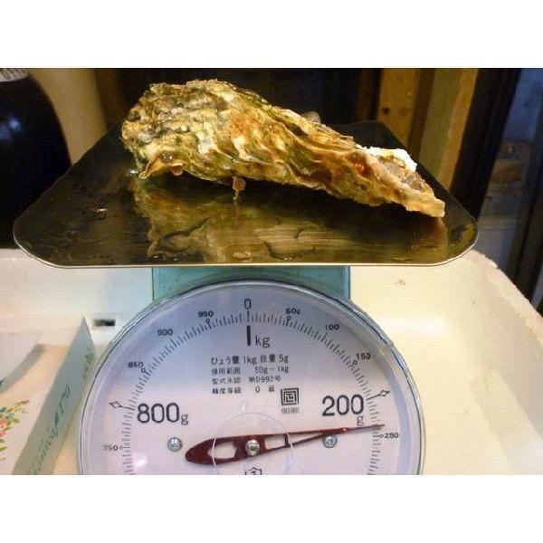 カキ 殻付かき 20粒 牡蠣 i-ichiba 06