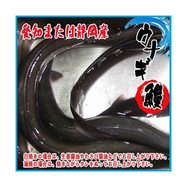 活 ウナギ 国産(愛知または静岡産) 5尾(1尾あたり200g前後) 約1kg  鰻 うなぎ