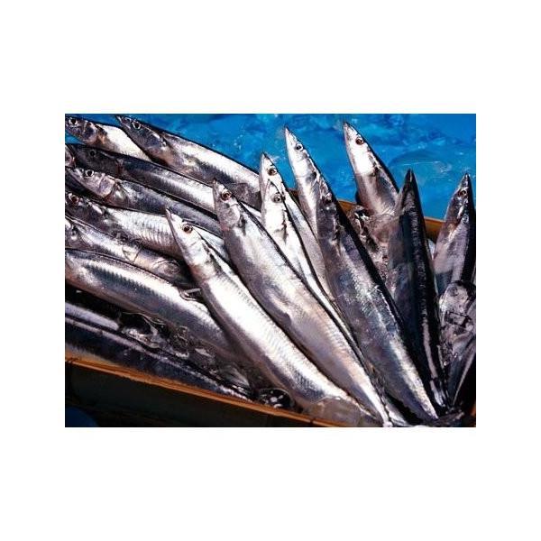 サンマ 2kg 1尾150g以上 約10-12尾前後 北海道産  秋 サンマ 秋刀魚 さんま|i-ichiba|02