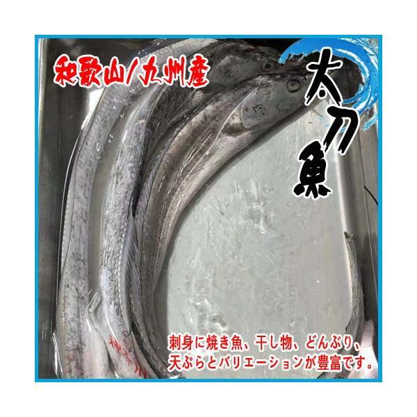 【業務用】生 天然 太刀魚 和歌山/九州産 太刀魚 約3kg(2-4尾前後入り)|i-ichiba