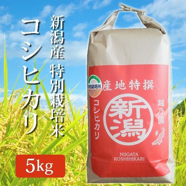令和2年産 2020年度産 玄米 米 特別栽培米 新潟県産コシヒカリ こしひかり 5Kg (5キロ) 新潟産 コシヒカリ 代引不可 同梱不可