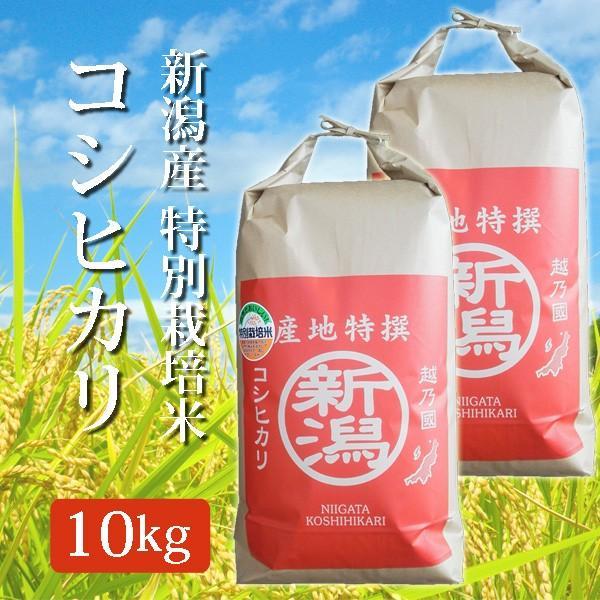 新米 令和3年産 2021年度産 玄米 特別栽培米 新潟県産コシヒカリ こしひかり 10Kg (10キロ)  5kg×2袋 新潟産 コシヒカリ 代引不可 同梱不可