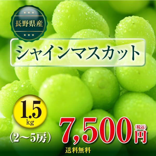 長野県産 シャインマスカット1.5kg(2〜5房) 種無し 皮ごと 数量限定 予約商品 産地直送 クール便 ぶどう