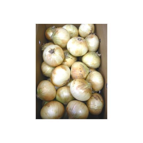 国産 玉ねぎ 玉葱 1箱10kg 送料無料