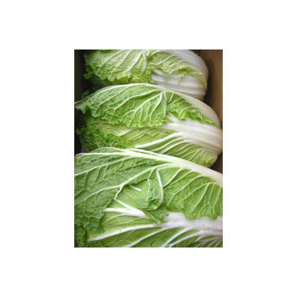 国産 はくさい 白菜 1箱 12kg 送料無料