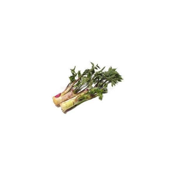 お取り寄せ 山形県飯豊町産 天然山菜山うど塩蔵 1kg 東北関東送料無料 天然だから 限定品