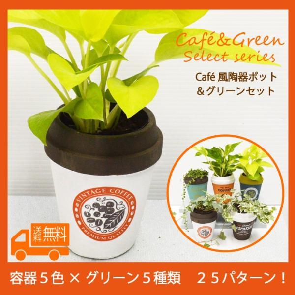 カフェ風容器グリーンセットポトス
