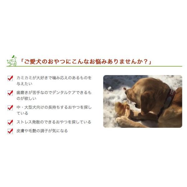 15日限定ポイント5倍 犬 おやつ ガム 無添加 国産 神戸ポーク豚耳 5枚入 iliosmile 04