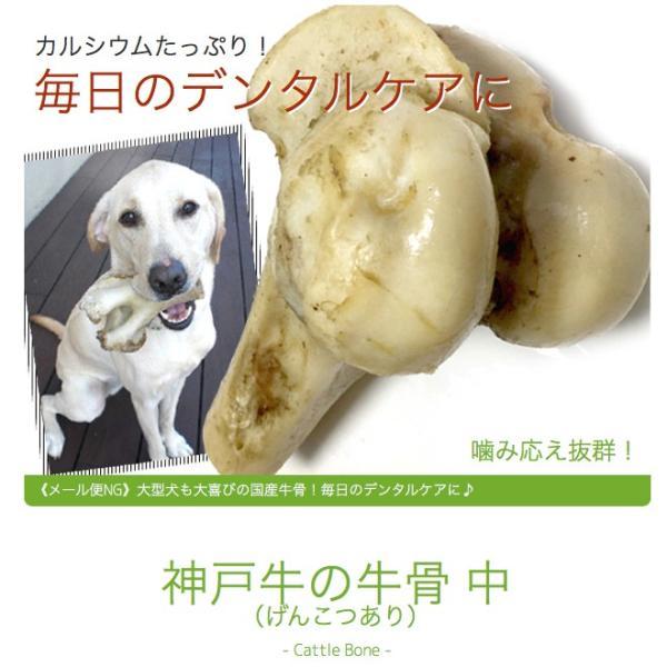 犬 おやつ 骨 無添加 国産 神戸牛の牛骨 げんこつ有 中 1本700〜899g イリオスマイル ポイント消化|iliosmile|05