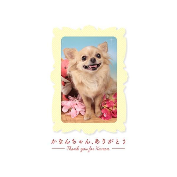犬 ミルク 無添加 オランダ産 オーガニックヤギミルク 50g イリオスマイル ポイント消化 iliosmile 13