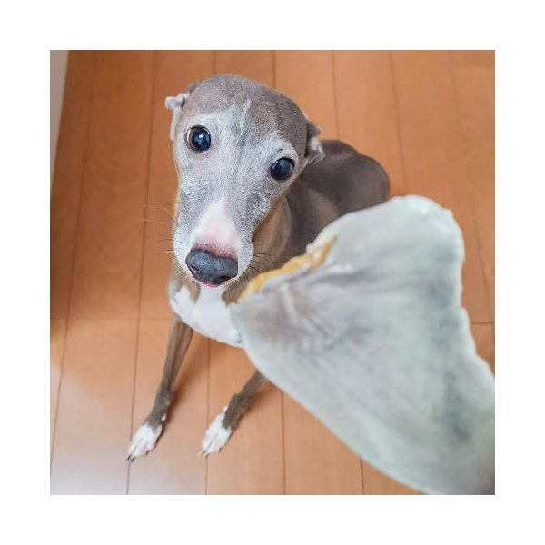犬 おやつ 無添加 国産 魚 アレルギー サメ 淡路島産 フカヒレジャーキー 50g イリオスマイル|iliosmile|04