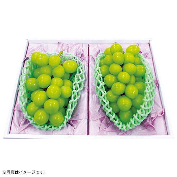 お中元 御中元 ギフト とうもろこし 詰め合わせ 送料無料 北海道 北海道産黄色&白いとうもろこしセット|inageya-net