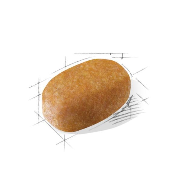 ロイヤルカナン マルチーズ 専用フード 成犬〜高齢犬用 500g 送料無料 あすつく|inuneko-royalcanin|02