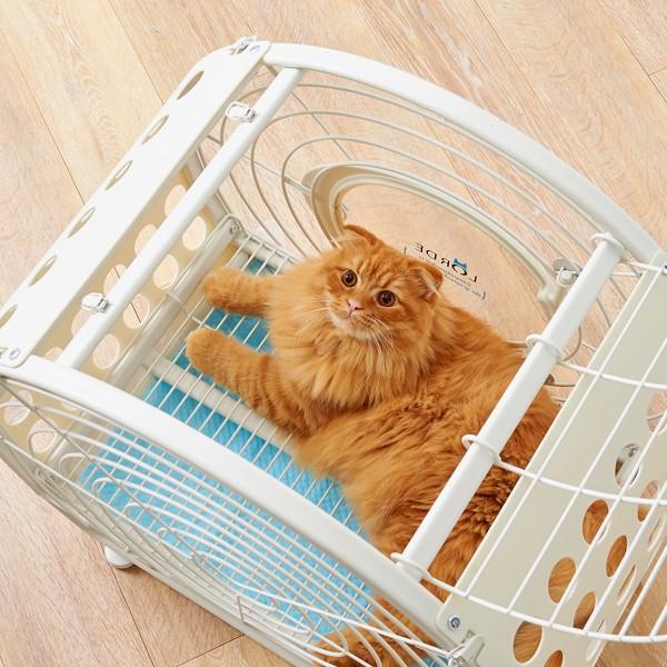 【大型商品】 タイムトンネル 猫 ネコ キャット ケージ オシャレ TIME TUNNEL PET CRATE【大型送料・同梱不可】|ip-plus|05