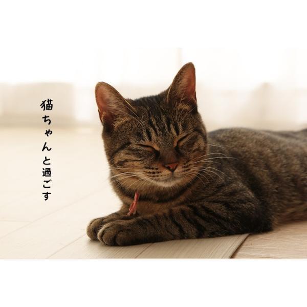 上からシステム猫トイレスターターセット アイリスオーヤマ システムトイレ用 1週間におわない 消臭シート 脱臭シート 猫トイレ ネコトイレ|irisplaza|19