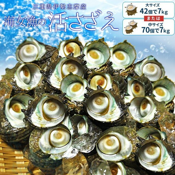 三重県 伊勢志摩産 海女漁 天然 活 さざえ 7kg 送料無料 サザエのサイズと個数が選べます 敬老の日 ギフト