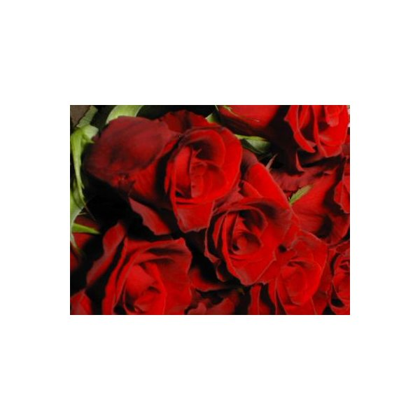 バラ 花束 12本 赤バラ(本体価格4,200円)|ispecial|02