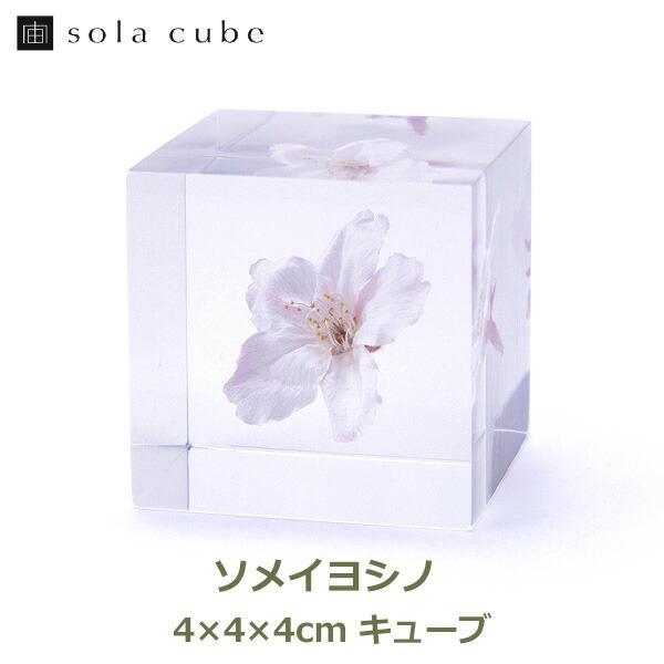 宙キューブ ソメイヨシノ 4cm Sola cube さくら 桜 ウサギノネドコ ソラキューブ クリア おしゃれ プレゼント ギフト お祝い サクラ 花 透明