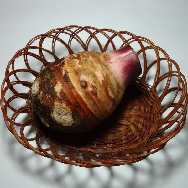 赤芽親芋 里芋(さといも)1-2個 約500g 福岡産