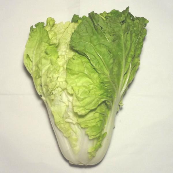 極早生白菜(レタサイ)(生食できる白菜約800g前後)福岡産