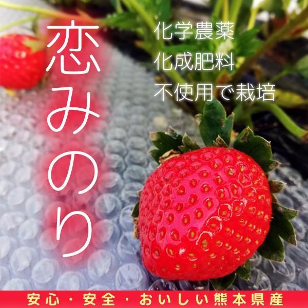 送料無料 有機イチゴ2パック入り 恋みのり 熊本県産|itofarm
