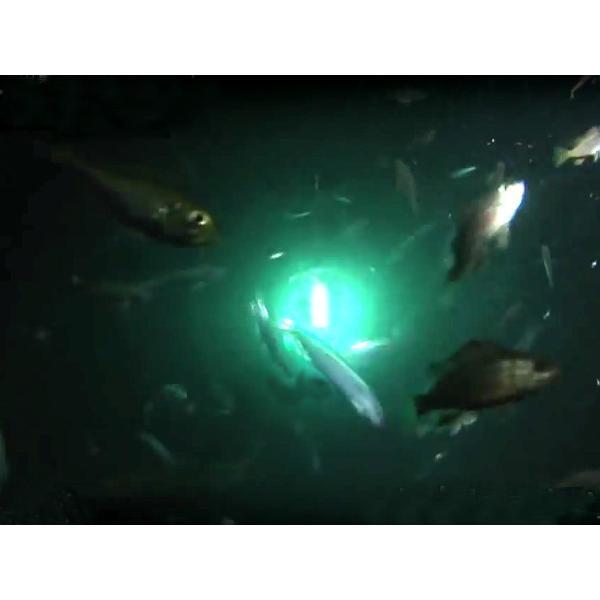 ルミカ 集魚ライト VOLT ボルト  ブルー 集魚灯 約150ルーメン 水中集魚灯|itoturi|06