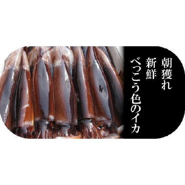一夜干しイカ4枚 新潟名物 日本海のイカ 送料別  |iwamatsu-salmon|03