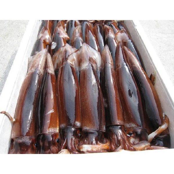 一夜干しイカ4枚 新潟名物 日本海のイカ 送料別  |iwamatsu-salmon|06