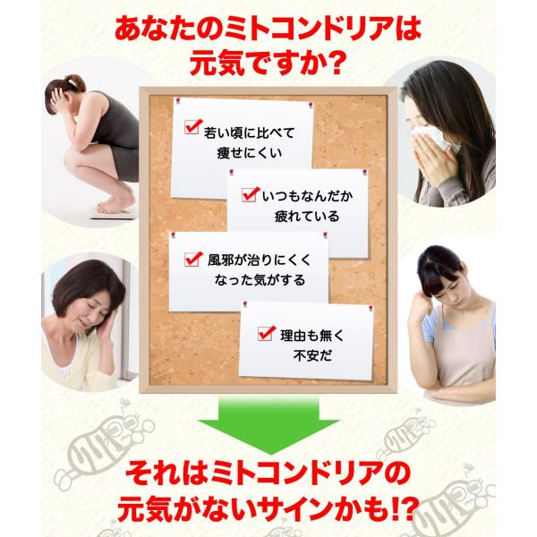 お試し ミトコンドリア サプリメント ミトコンサプリP3 初回限定 女性 男性【71206】 j-cosme 02