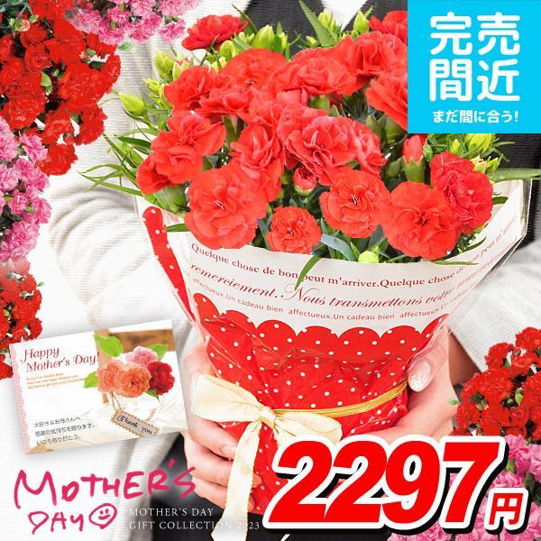 母の日2021花ギフトプレゼントカーネーション鉢植え4号鉢鉢花生花2021早割