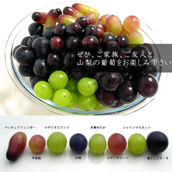 お中元 御中元 ギフト フルーツ ぶどう 葡萄 ブドウ ハウス シャインマスカット|jerichojericho|06