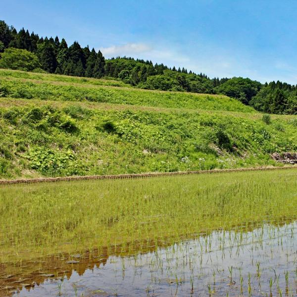 新米 2018 コシヒカリ 30kg 富山県産ふくみつ保有米 30年産 玄米 送料無料 jibamon 04