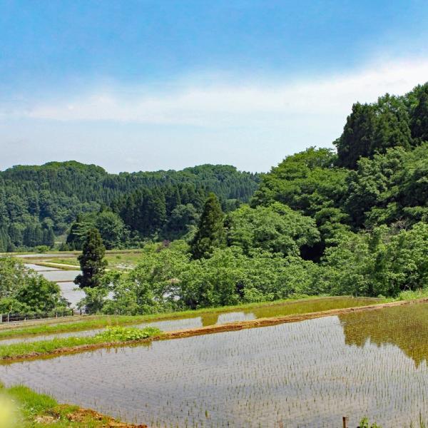 新米 2018 コシヒカリ 30kg 富山県産ふくみつ保有米 30年産 玄米 送料無料 jibamon 05