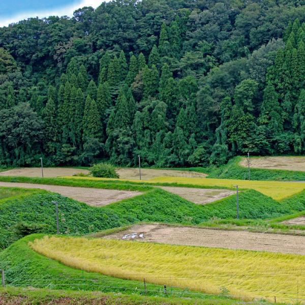 新米 2018 コシヒカリ 30kg 富山県産ふくみつ保有米 30年産 玄米 送料無料 jibamon 08