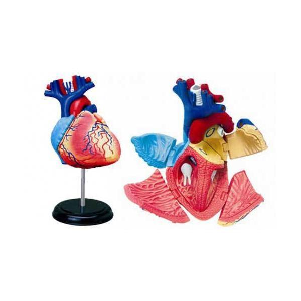 立体パズル 4D VISION 人体解剖 No.10 心臓解剖モデル